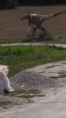 Dinosaur - Photo of Prayssas