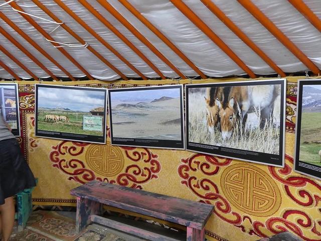 Geschichte der Przewalski-Pferde