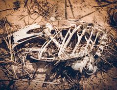 bones & feathers IV