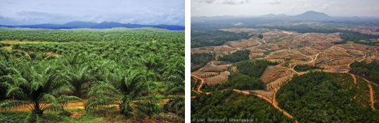 palmoilplantationfragmentation