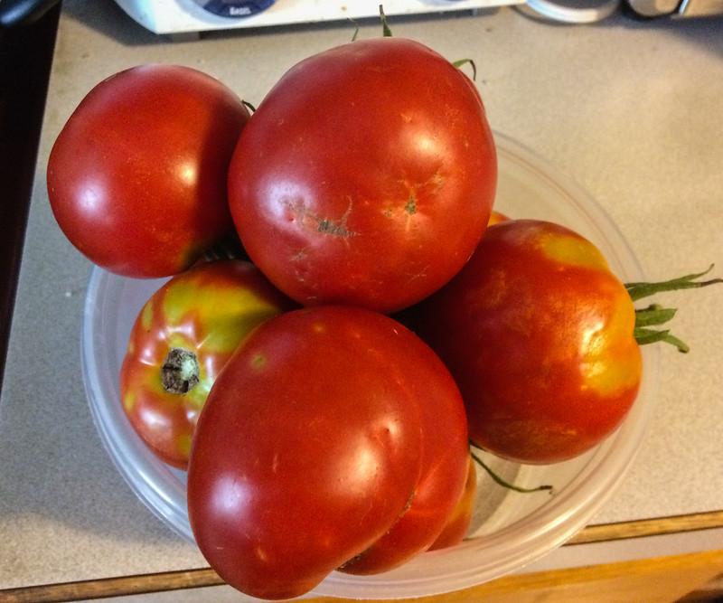 tomato_harvest_20170904_101