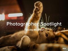 Photographer Spotlight - Felicity Berkleef