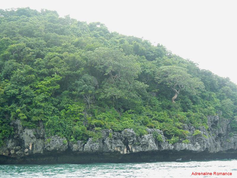 Verdant vegetation