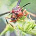 Bee Careful by peggypryor68