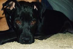 My pup Jet
