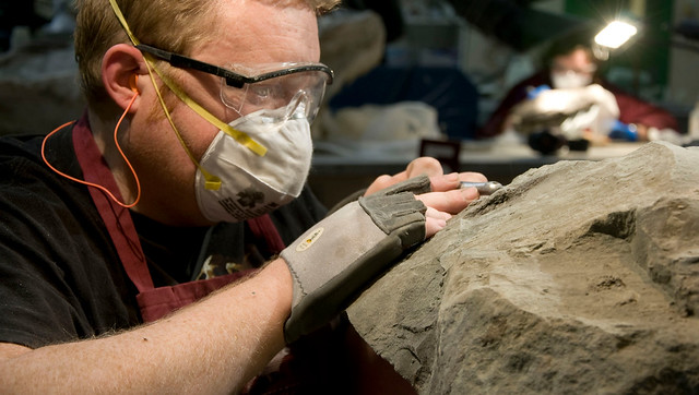 1 - New caption - Technician Mark Mitchell prepping the Nodosaur