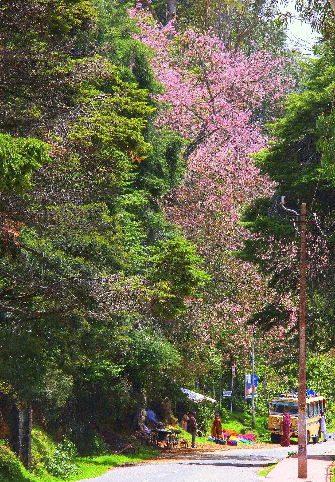 Beautiful Kodaikanal is called princess of the hill stations