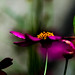 glowing yellow heart, purple petals