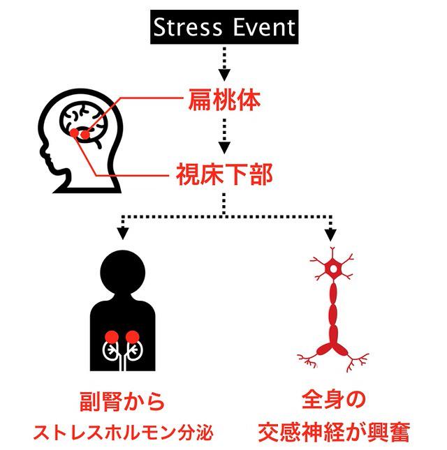 ストレス反応まとめ