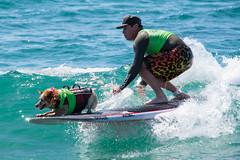Surfdog Tandem Riders #hb #huntingtonbeach #surfing #surf #dog #surfdog #dogbeach #dogsurfing #surfingdog #abc7eyewitness #nbc4you #cbs2la #surfcity #surfcityusa @surfdogevents