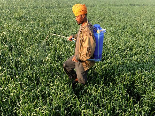कीटनाशक का छिड़काव करता किसान