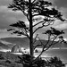 Looking to Cannon Beach (Ecola State Park, Black & White) by thor_mark 