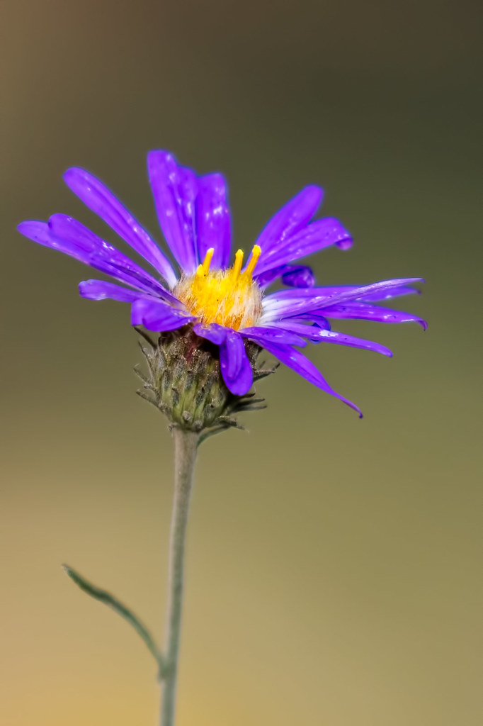 Wild-Flowers-63-7D2-090717