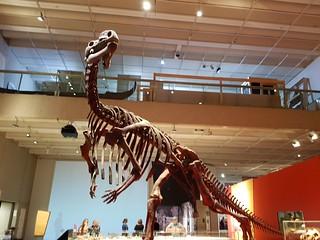 Muttaburrasauraus