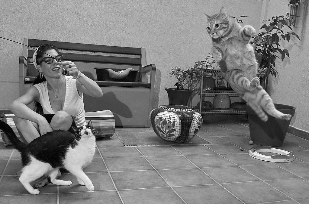 Àlex BN i els gats 7