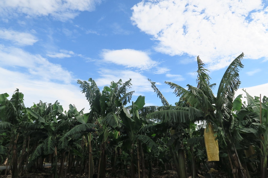 台灣香蕉科技園區 (10)