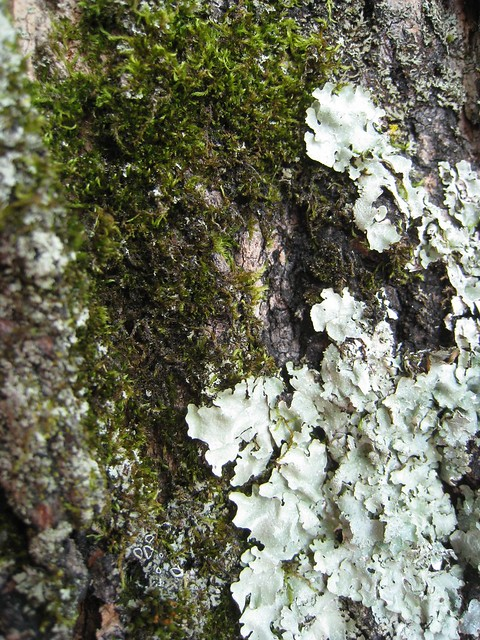 bark, moss, and lichen, Canon POWERSHOT SD870 IS