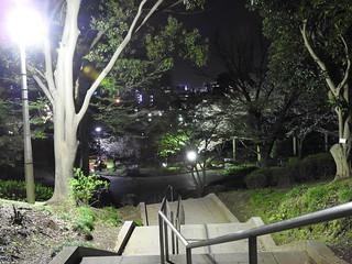 千葉公園綿打池 夜桜ライトアップ01