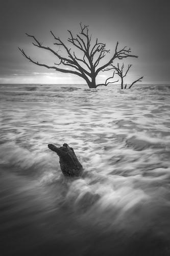 Lost to the sea...  Botany Bay, Edisto Island, South Carolina