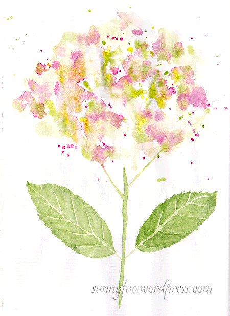 hydrangea-splots