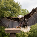 International Birds of Prey Centre (23)