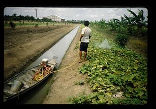 輪中の野菜畑の薬剤散布
