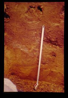 Gleyed Soils = グライ土壌