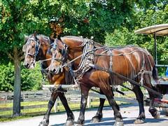 Horse drawn wagon at Lake Farmpark