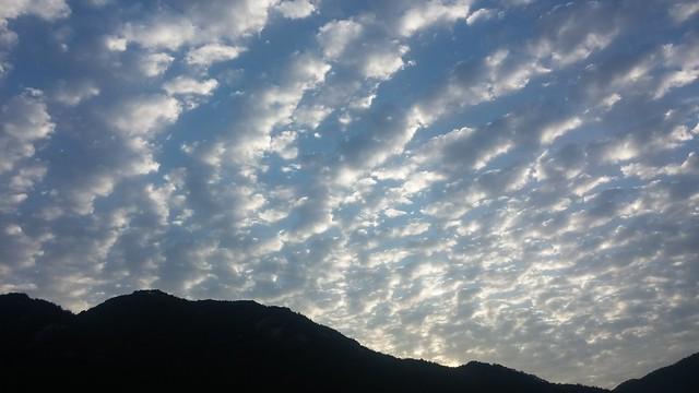 구름 버섯 가득한 아침 하늘