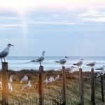 Photos des lecteurs | Face a la mer - Embouchure du Courant d'huchet