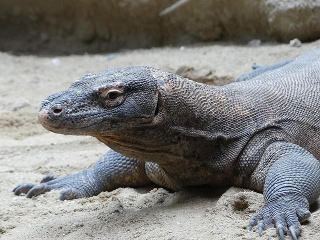 Komodowaran, Zoo Prag