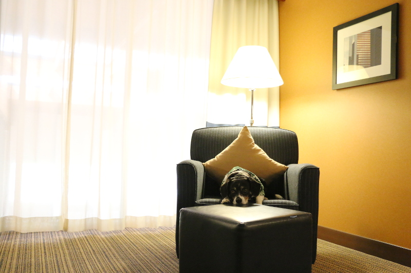 doubletree-hilton-cranberry-hotel-room-dog-4