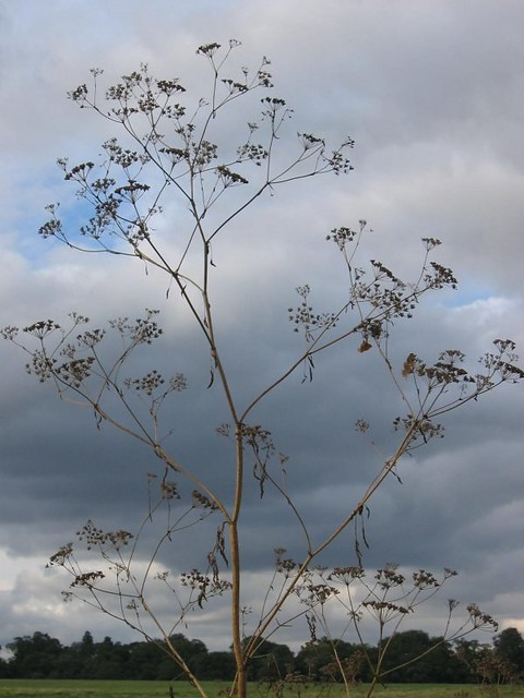 plant against the clouds