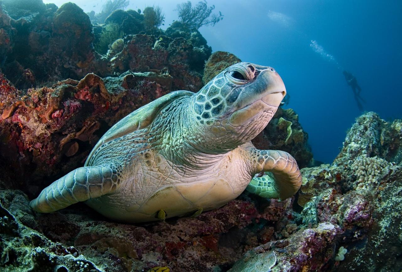 привожу пример, животные живущие в океане в картинках общем