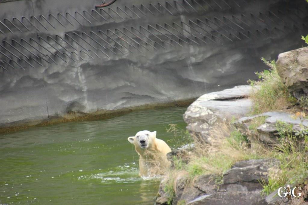 Besuch Tierpark Friedrichsfelde 20.08.1714