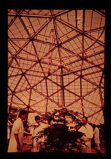 熱帯農業研究センターの温室