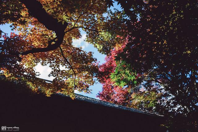 十年,京都四季 | 卷五 | 京都與我,有時還有關西 | 12