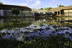 Hurricane Irma: The Aftermath