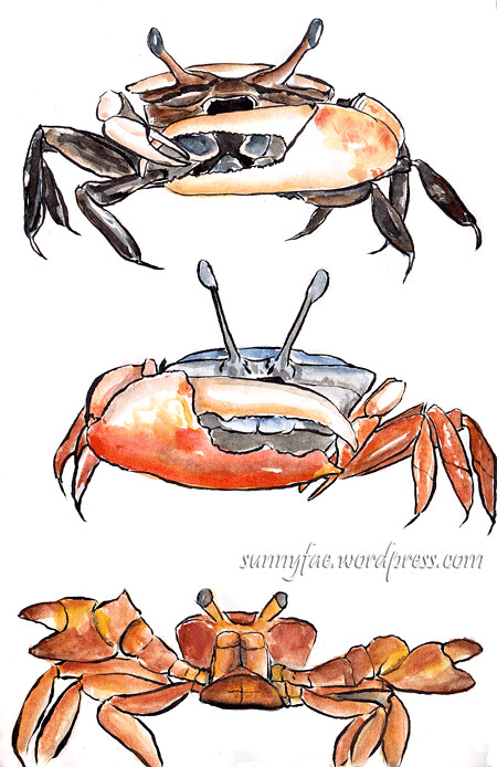 crab sketches