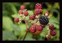 P1200252-1 - First Blackberry
