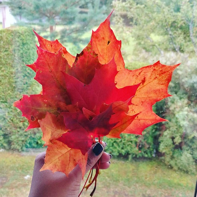 Seasonal colors and Scandinavian scenery. _______ #autumncolors #fallishere #fallinspiration #fall #autumn #leafs #autumnleaf #scandanavia #sweden #autumnbreak #auburn #autumnoak #forestbreak #woodland #swedishwoods #changeofseason