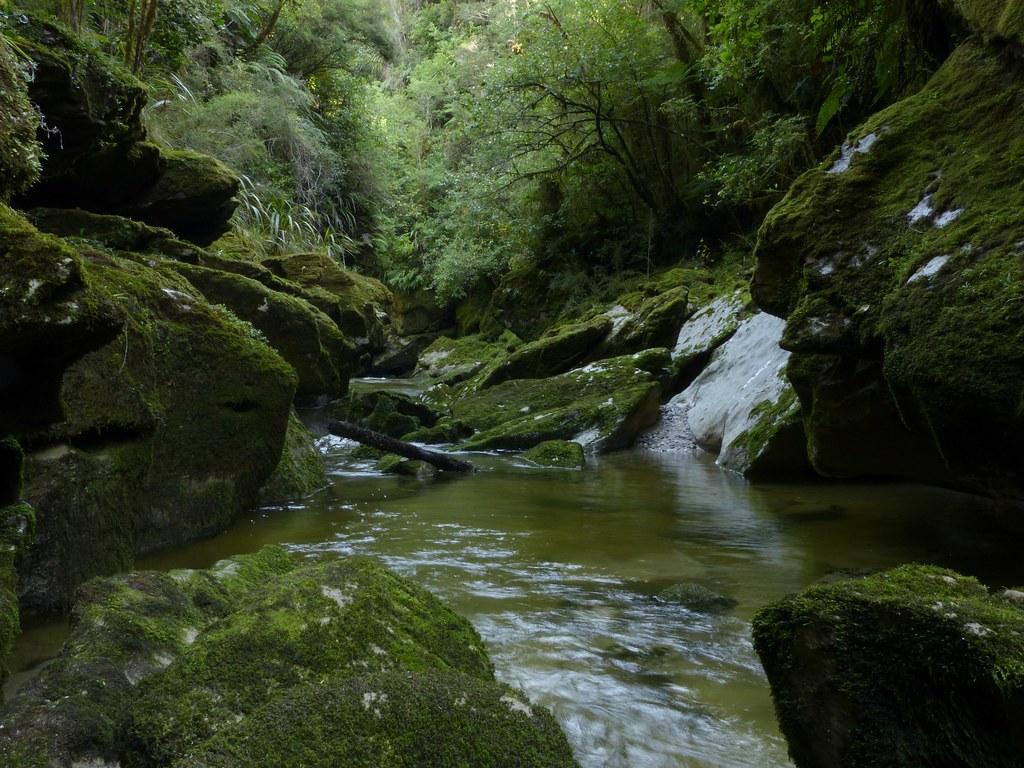 Kotihotiho ~ Cave Creek