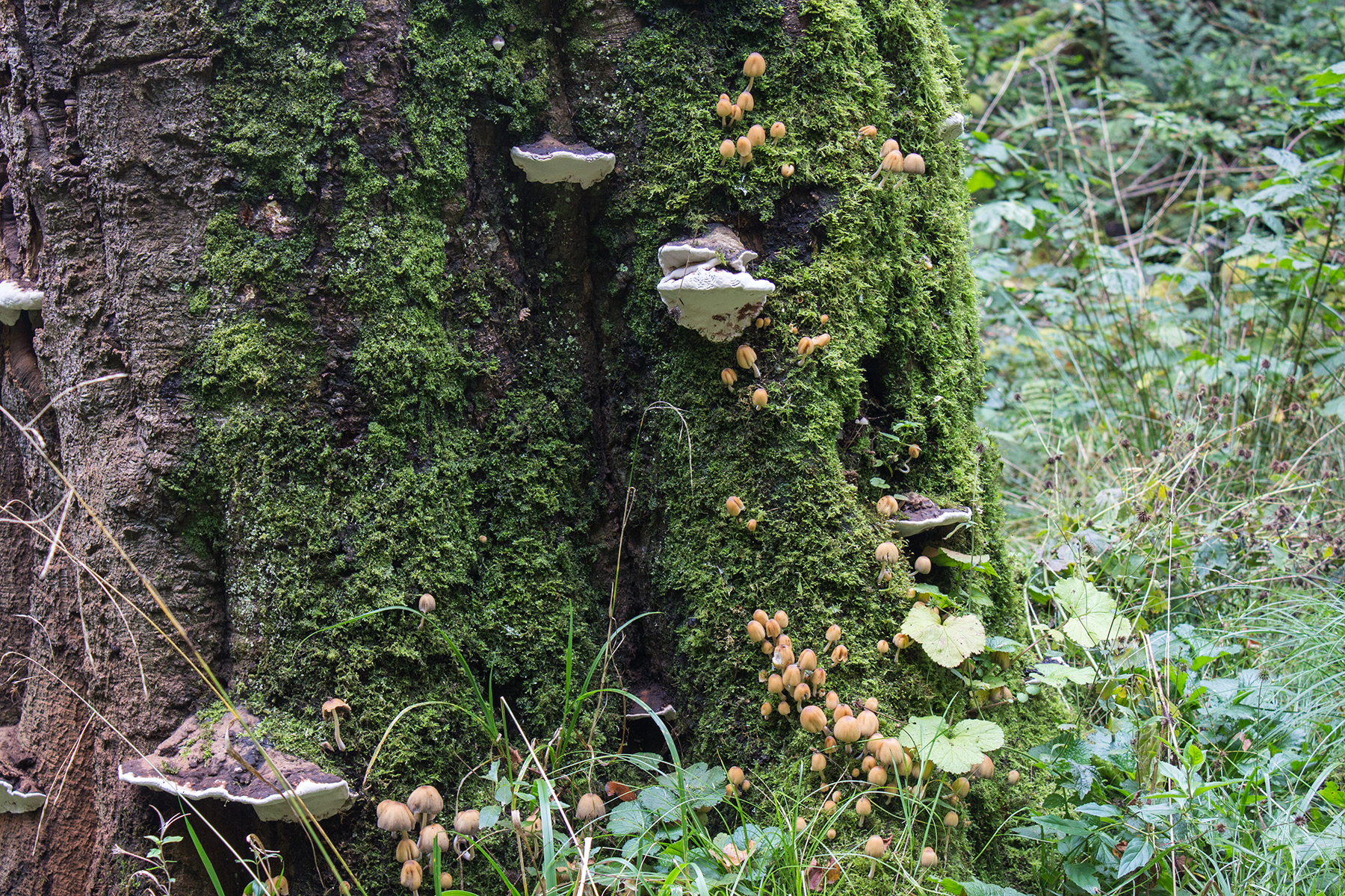 Woodland Walk to Haigh Hall | Mushrooms on Tree