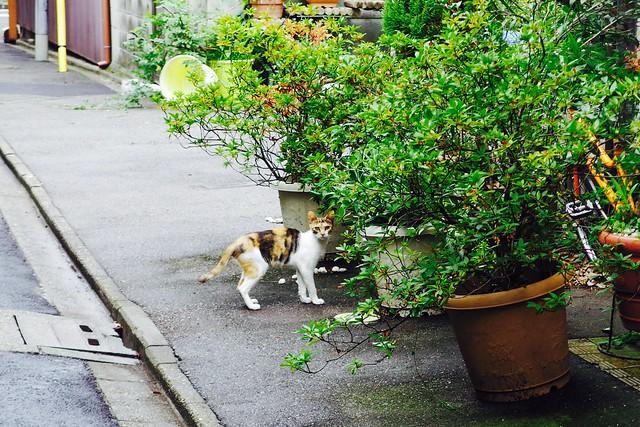 Today's Cat@2017-08-17