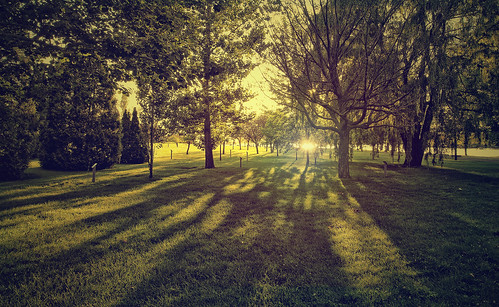 montreal summer outside parc sunset dusk trees 7dwf landscape sunlight light canon t5i 700d 16mm life shadows green bright nature sunshine akigabo