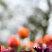 Fleur délicate