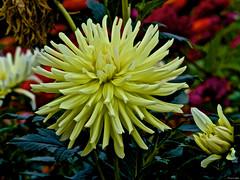 En un jardín multicolor