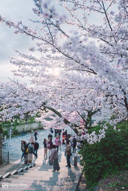 十年,京都四季 | 卷四 | 那兒春色滿城 | 28