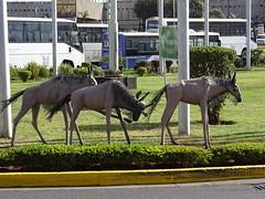 Nairobi&Mad'car '17