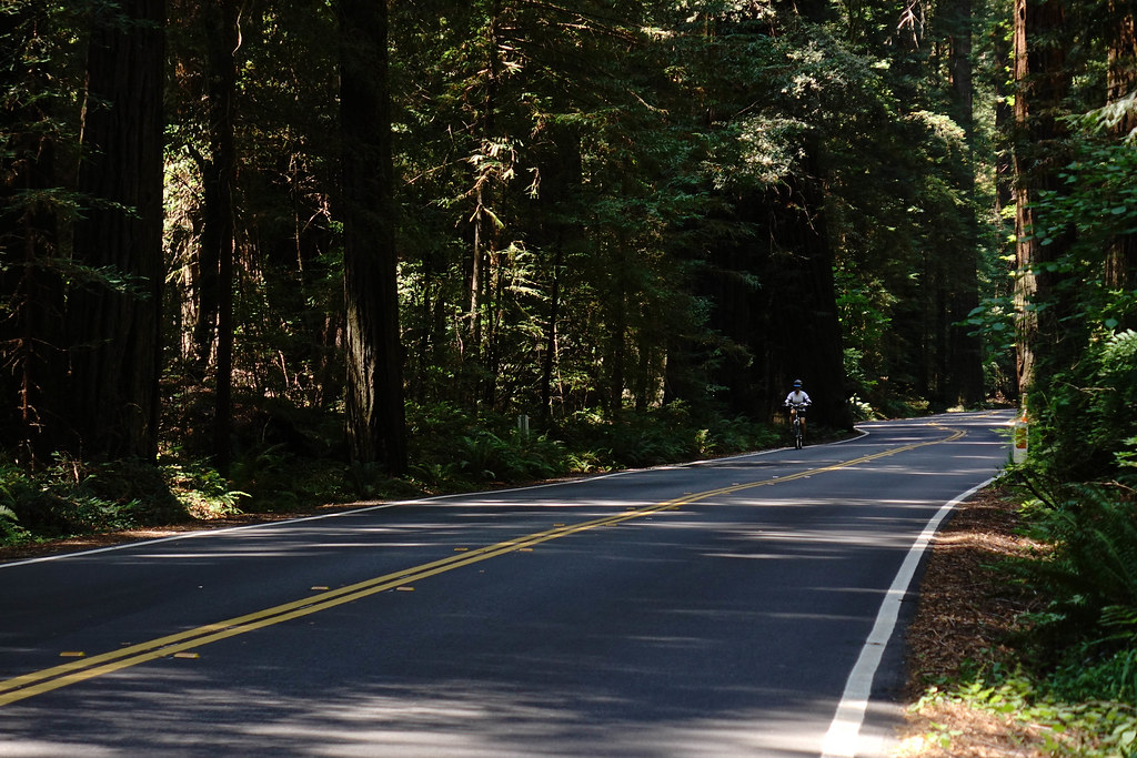 Bicyclist on The Avenue of the Giants